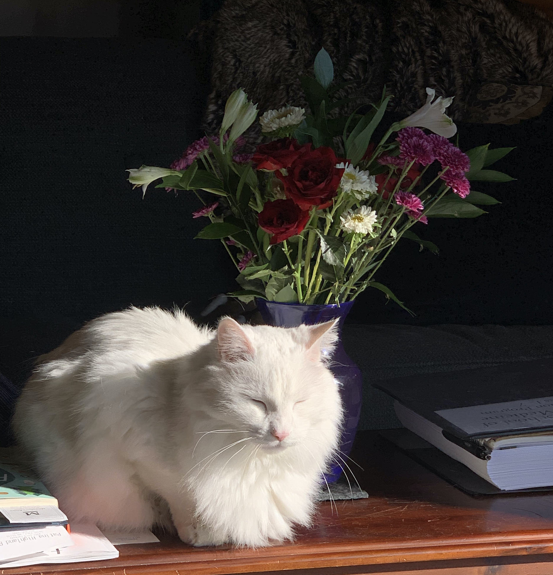 Cosmo is a Flower